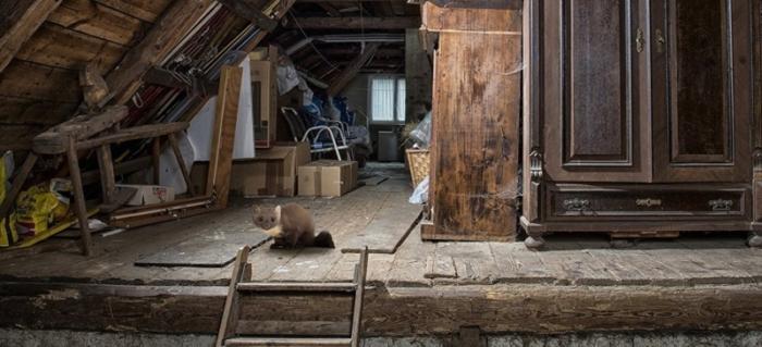 Marderabwehr Haus loswerden
