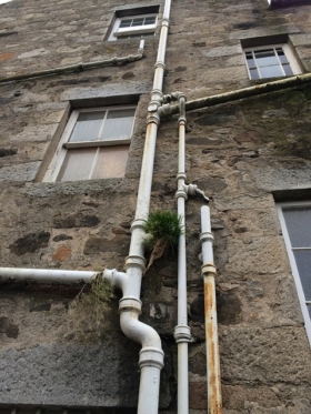 Marderschutz Dachrinne, können marder klettern
