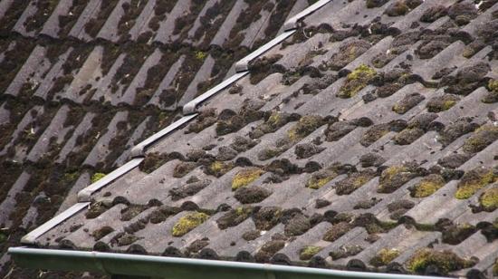 Marderschreck Dachboden
